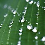 Экология и природопользование. Экологическая экспертиза. Экологический контроль