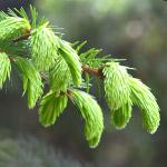 Лесной фонд: курс обучения Особенности предоставления и использования земель лесного фонда